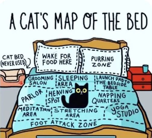 Map of Bed.JPG