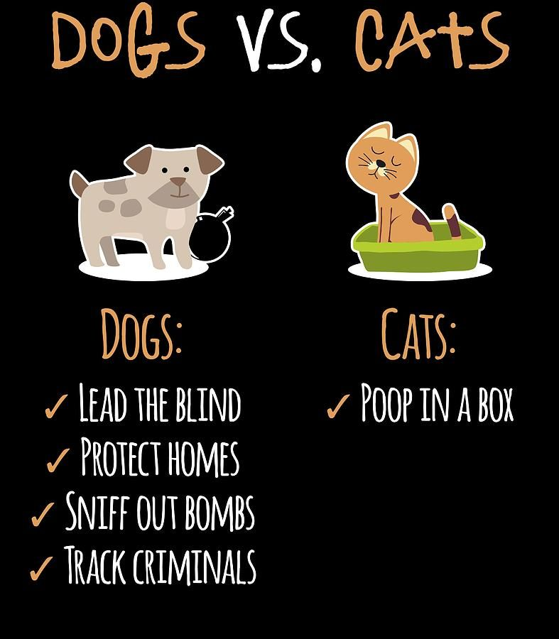 dogs-vs-cats-jk.jpg